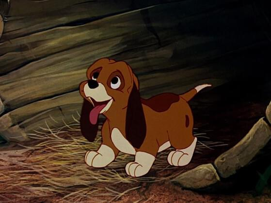 The Fox and Hound make an unbeatable pair. What's the name of this cute coonhound?