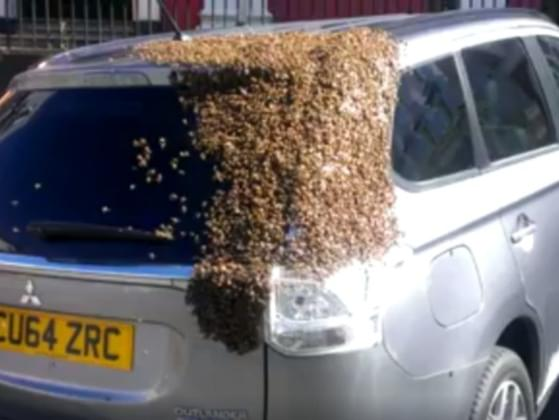 This article claims a woman was chased for two days in her car by 20,000 bees. Real or fake?
