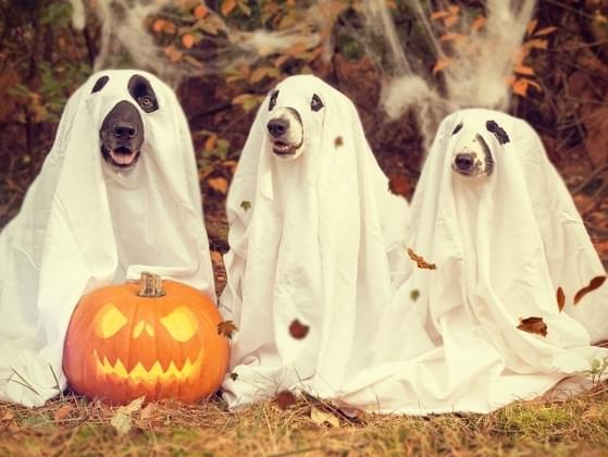 What Halloween costume would you wear?