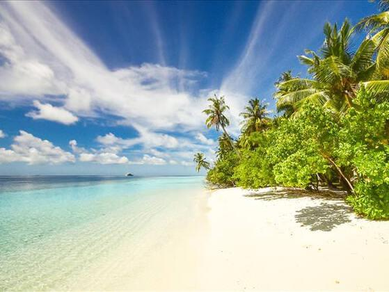 If you were stuck on a desert island, what is one item you would bring with you?