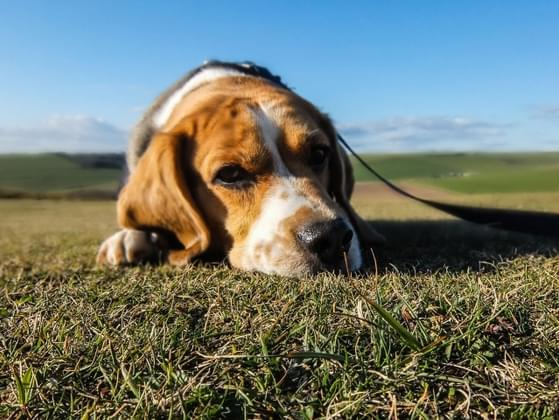 Which dog breed would you be most likely to buy?