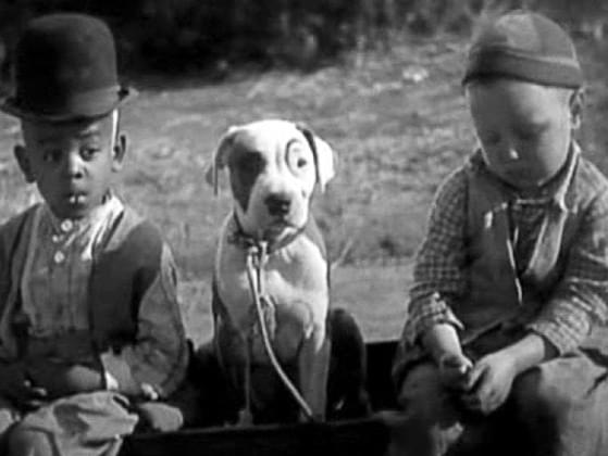 What's the name of this famous TV dog? (Hint: He starred on 'The Little Rascals.')