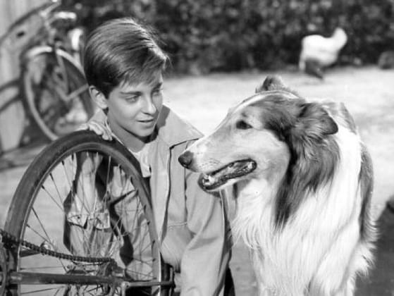 What's the name of this famous TV dog? (Hint: She was literally a life saver!)