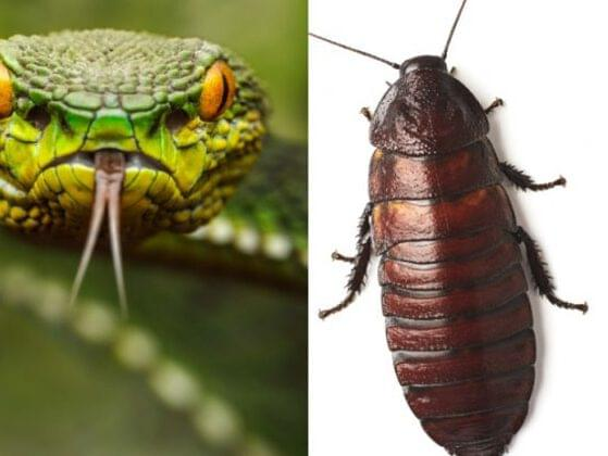 What creeps you out more: snakes or cockroaches?