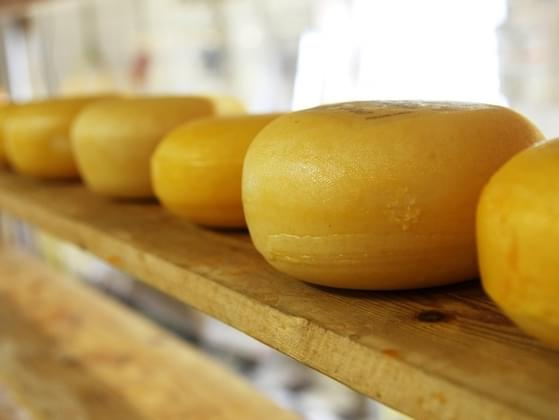 If you could only have one type of cheese for the rest of your life, which would it be?