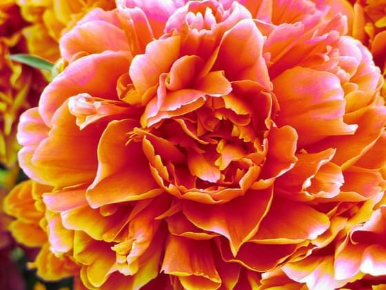 Pick the prettiest flower!