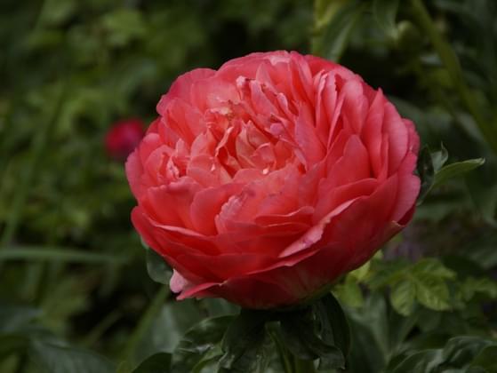 Pick the prettiest flower.