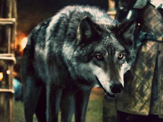 Which of the Stark Direwolves died first?