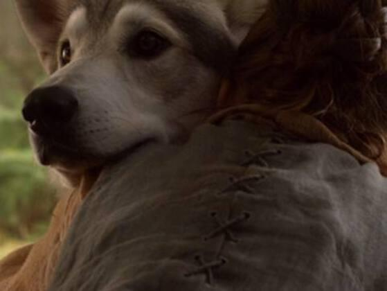 Which Stark family Direwolf was killed in retaliation for an attack on Prince Joffrey?