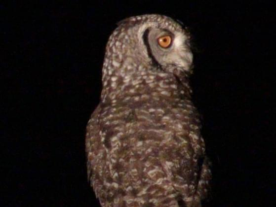 Are you more of a night owl or early morning riser?