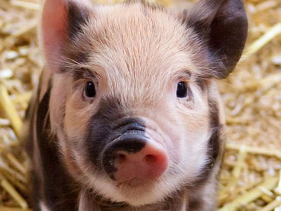 Which baby animal gives you warmest feelings?