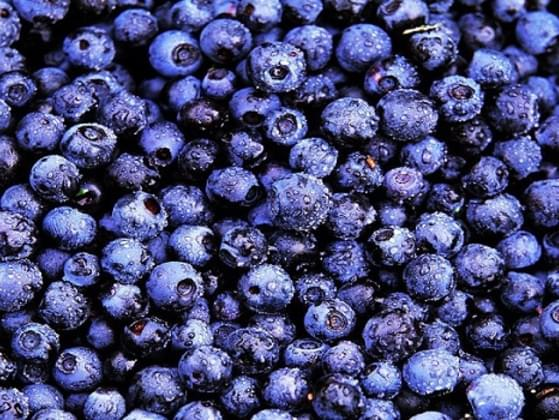 Have you tasted bilberries?