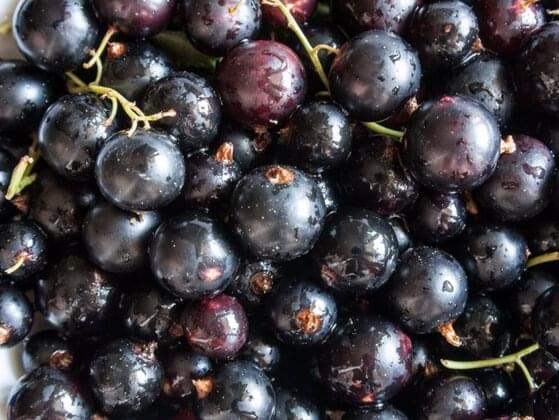 Have you tasted blackcurrants?