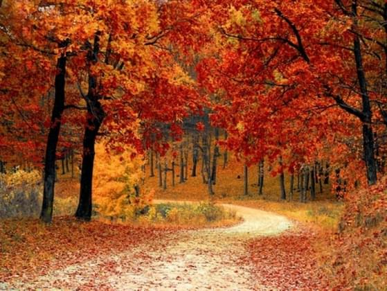 What do you like most about fall?