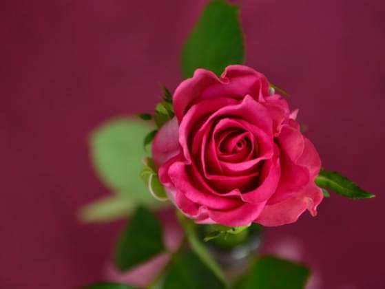 What do you associate roses with?