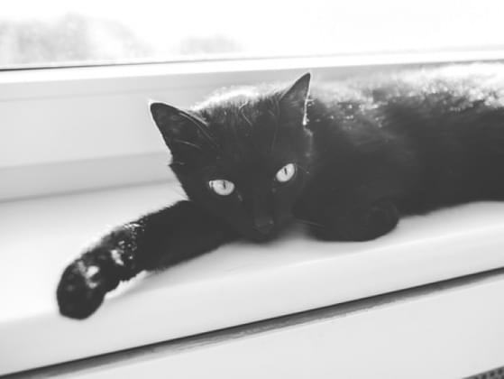 Do you think owning a black cat is bad luck?