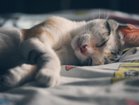 Which personality trait would you prefer in a cat?