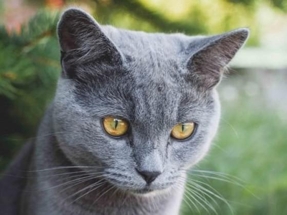Would you like your cat to be outdoors or indoors?