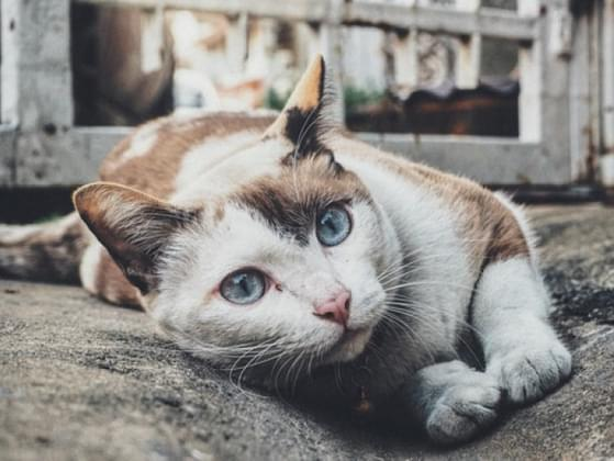 How energetic should your cat be?
