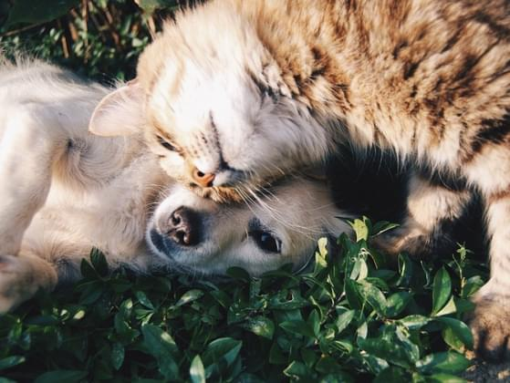 Are you more of a cat person or a dog person?
