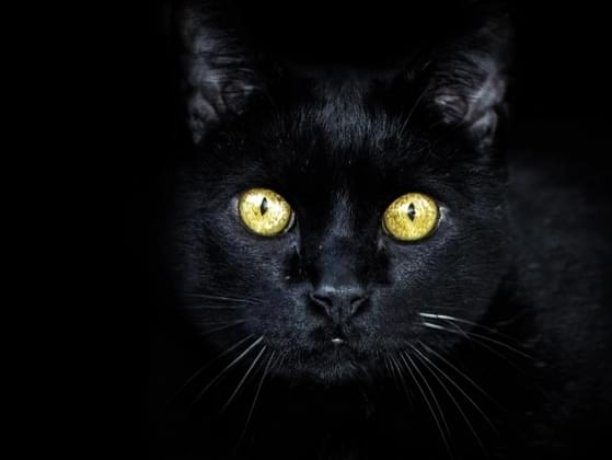 Which superstition do you believe in?