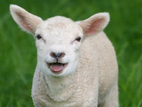 Which baby animal makes you happiest?