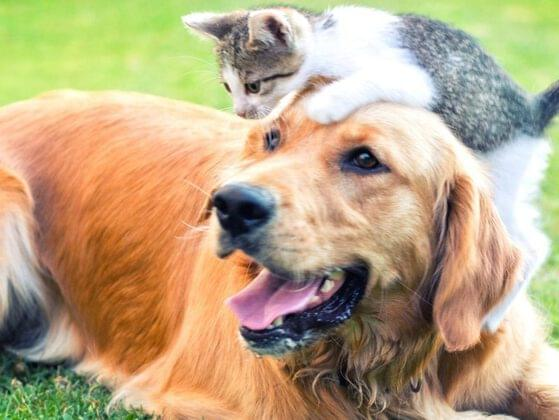 In which year the national pet day was observed fo the first time?