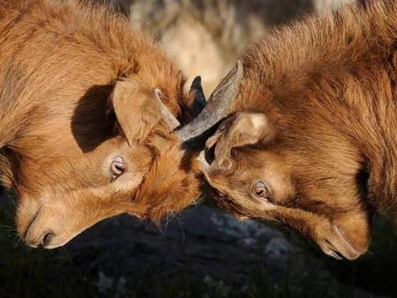 Are you confrontational?