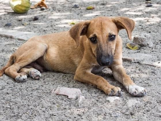 If you saw a stray dog/cat on the side of the road with no collar what would you do?