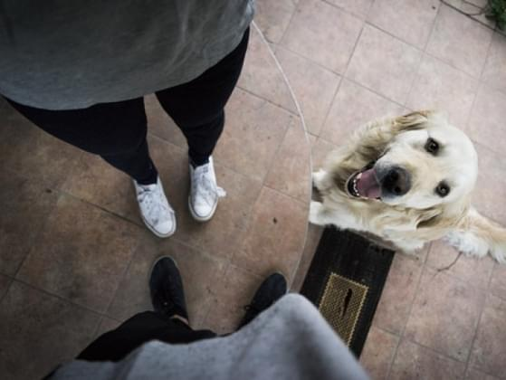 Does your pet always greet you when you come home?
