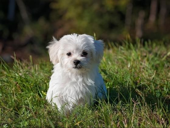 Your neighbor's dog has been going potty on your lawn. How do you handle it?