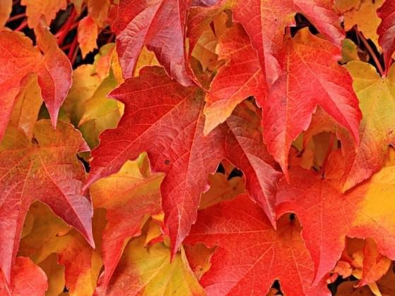 There is a huge pile of leaves in your yard. What's the first thing that crosses your mind when you see it?