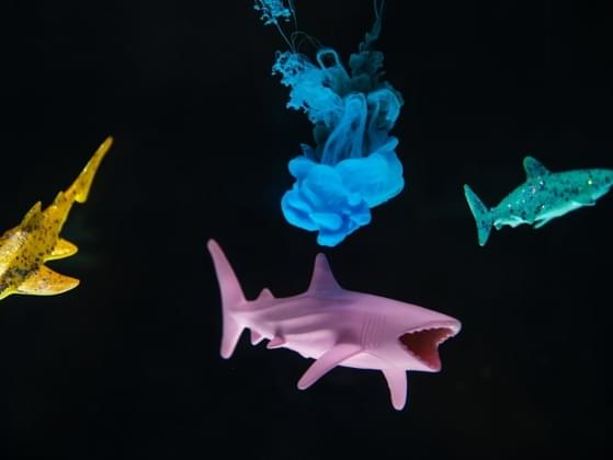 Sharks detect the smell of blood in the water through sensors in their...