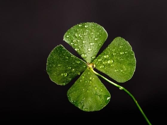 Do you believe that life is more luck or preparation?