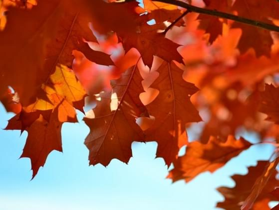 Which fall color are you most drawn to?