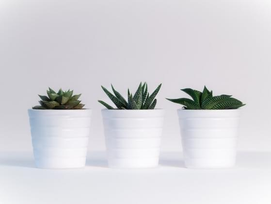 Take a look around your room. How many houseplants do you have?