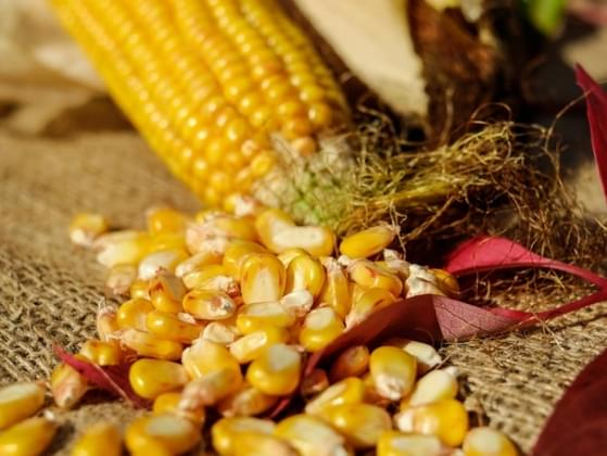 Which type of corn are you most likely to eat?