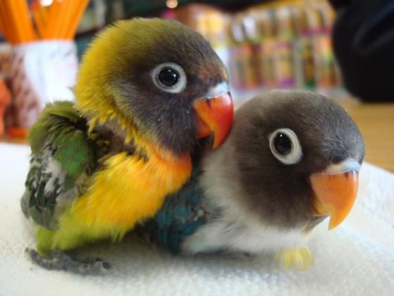 Pick a type of bird!