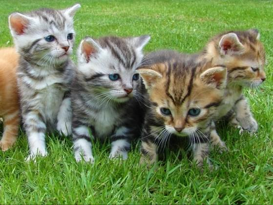 Would you rather play with a basket of puppies or a basket of kittens?