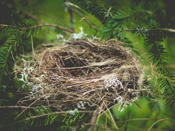 Have your children all left the nest?