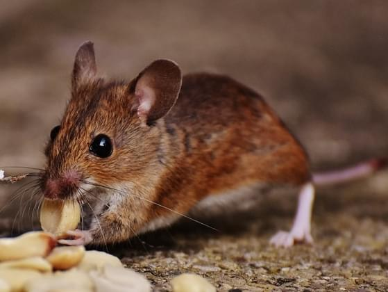 You have mice in your home. How do you handle the problem?