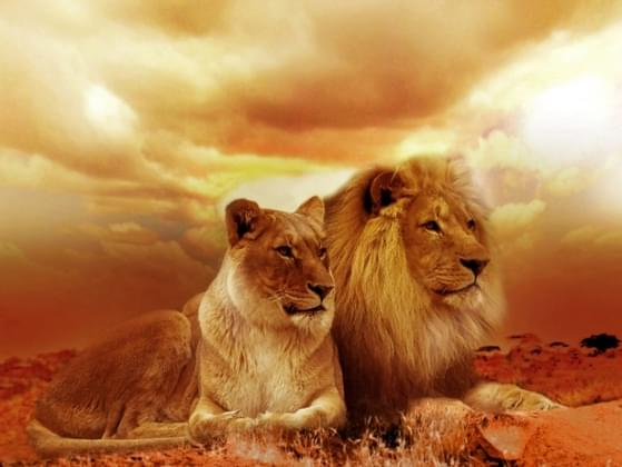 If you could be any of the big cats, which one would you want to be?