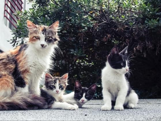 Do you prefer kittens or older cats?