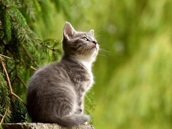 Do cats belong inside or outside?