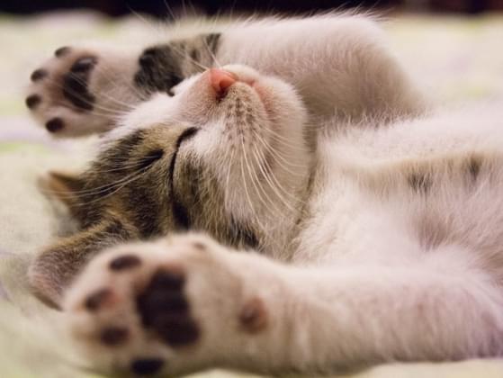 Do you take a lot of naps?