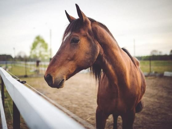 How much would you say you love horses?
