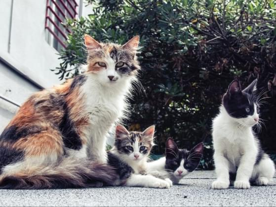 A stray cat had a little of kittens under your deck. What do you do?