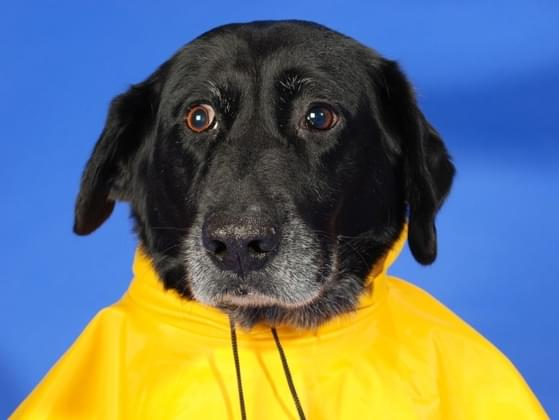 How many rain jackets do you own?
