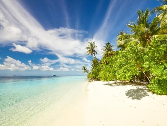 What would you bring on a desert island?