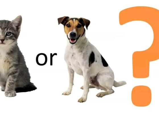 Cats or dogs?
